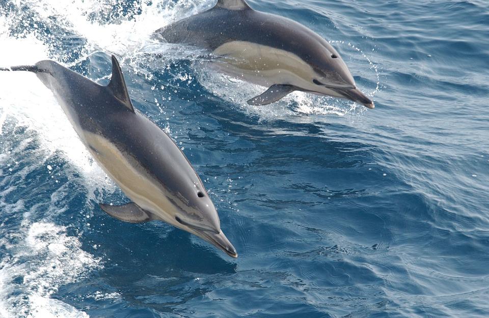 delfines 31-01-16