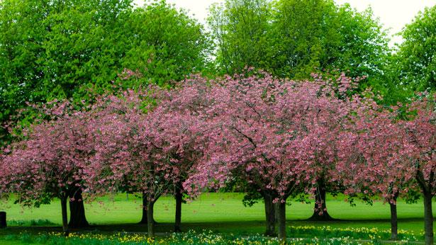arboles --primavera 10-03-16