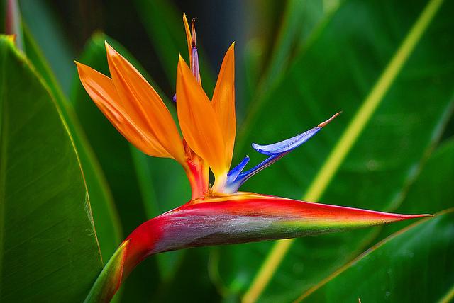 flor ENAJENADO 24-03-16