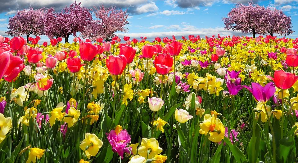 Primavera 20-03-16