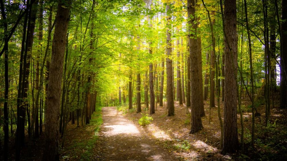 bosque 10-04-16