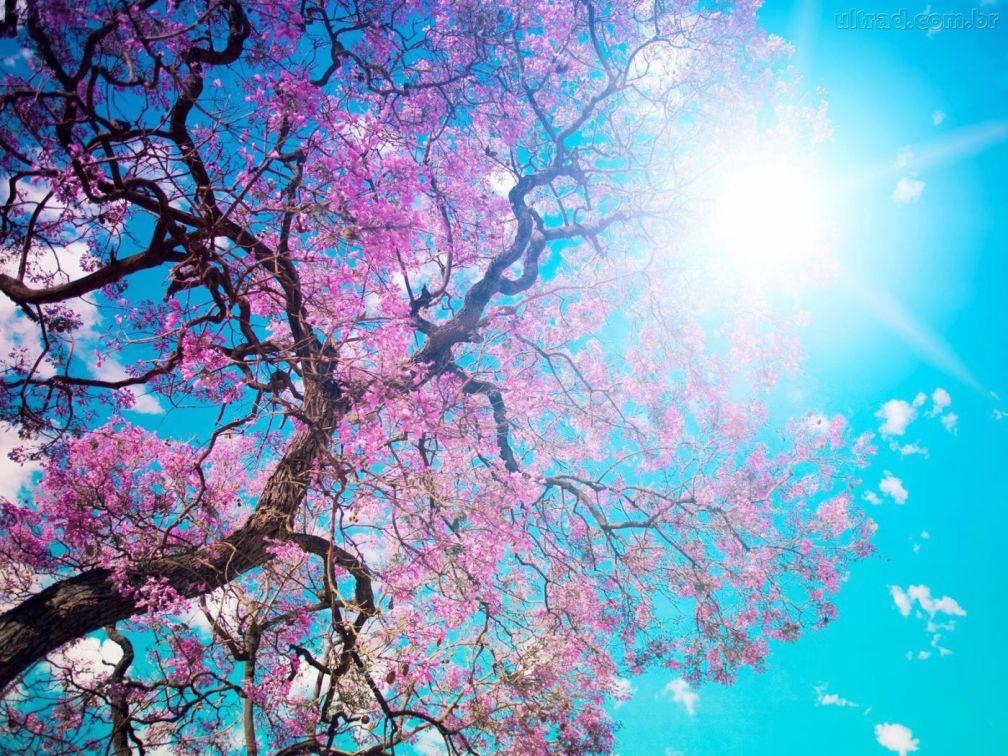 cancion de primavera 25-04-16